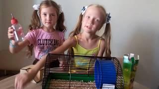 Покупаем джунгарских хомячков  Домашние питомцы Покупаем подарок джунгарские хомячки