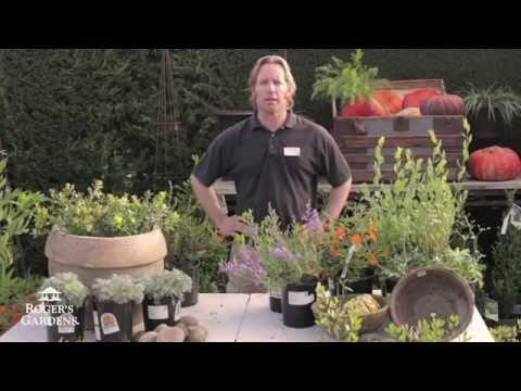 CA Friendly® Gardening Solutions  Adding CA Natives to Your Garden