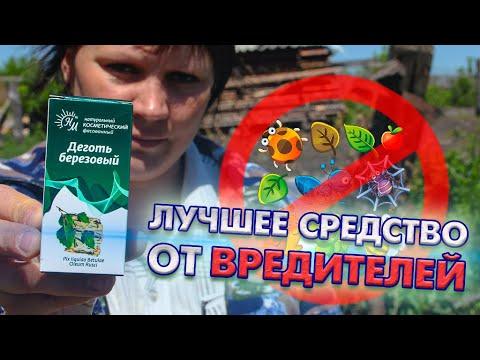 ✖️ Березовый деготь - лучшее средство от вредителей!