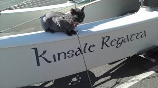 Catamaran Cat on a Hobie 16