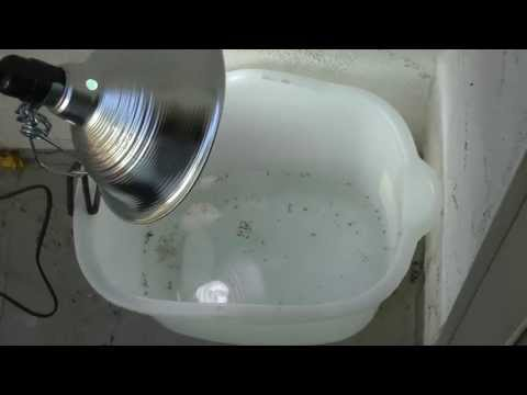 Homemade mosquito trap, simple, low cost, effective 2013-04-07