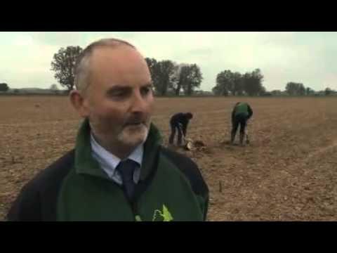 East Anglia planting scheme to beat Ash Dieback fungus