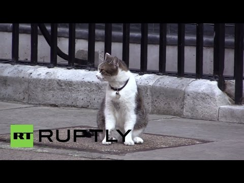 UK: MeeOW! Cameron's cat kicked by cop during Netanyahu visit