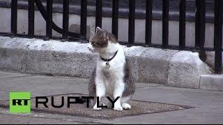بالفيديو.. رجل شرطة بريطاني يركل قط رئيس الوزراء البريطانى بسبب نتنياهو