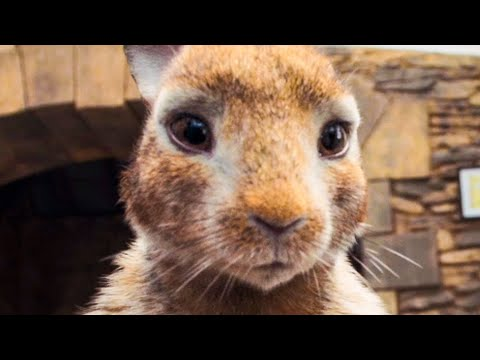 PETER RABBIT All Trailer + Movie Clips (2018)