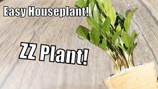 🌴ZZ Plant Care! Zamioculcas Zamiifolia || Houseplant Care Repot & Propagation