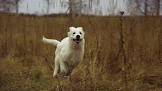СОБАКА В ДОМЕ:содержание | снаряжение | собачьи девайсы | Ч.4(ОТКРОЙ, ДРУГ! 4-й выпуск серии видео