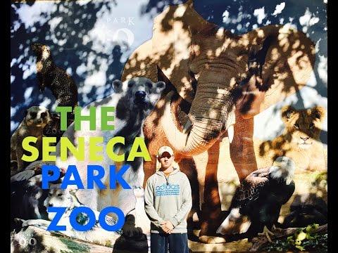 Let's journey to the Seneca park Zoo