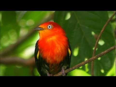 Amazon Rainforest - Soothing Relaxation Music with Nature Sounds