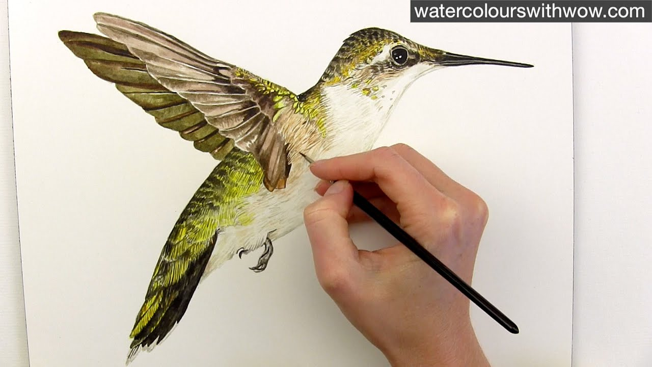how to paint realistic hummingbird feathers in watercolor by anna