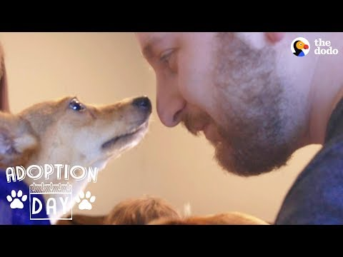 download Shy Little Dog Transforms In New Home - MUFFIN | The Dodo Adoption Day