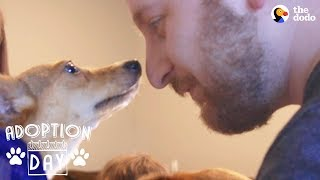 Shy Little Dog Transforms In New Home  MUFFIN | The Dodo Adoption Day