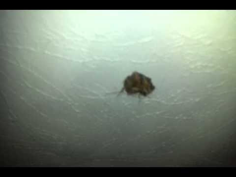 Squirrel Hole In Ceiling You