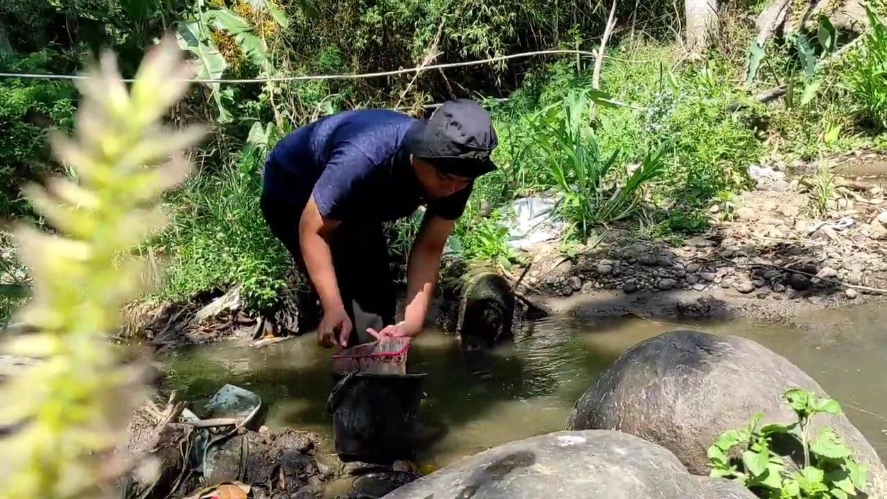 Cara Mencari Cacing Sutra Tubifex Sp Di Alam Sebagai Pakan Untuk Larva Benih Ikan Youtube