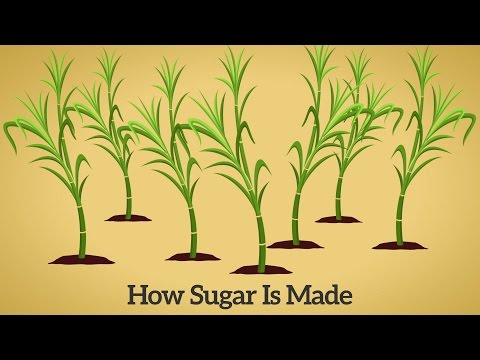 How Cane Sugar Is Made