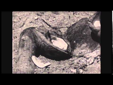 "Australian WWII Survival Training Film - ""Living Off The Land"" 1944"