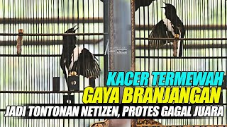 PROTES GAGAL JUARA, KACER JAGUAR TERMEWAH GAYA BRANJANGAN PALING EXOTIC JADI TONTONAN !