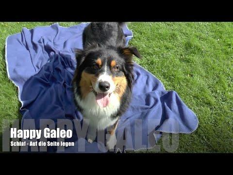 Schlaf - Jeditrick - Auf die Seite legen - Einsteigertrick 1 von 3 - Leichte Hundetricks beibringen