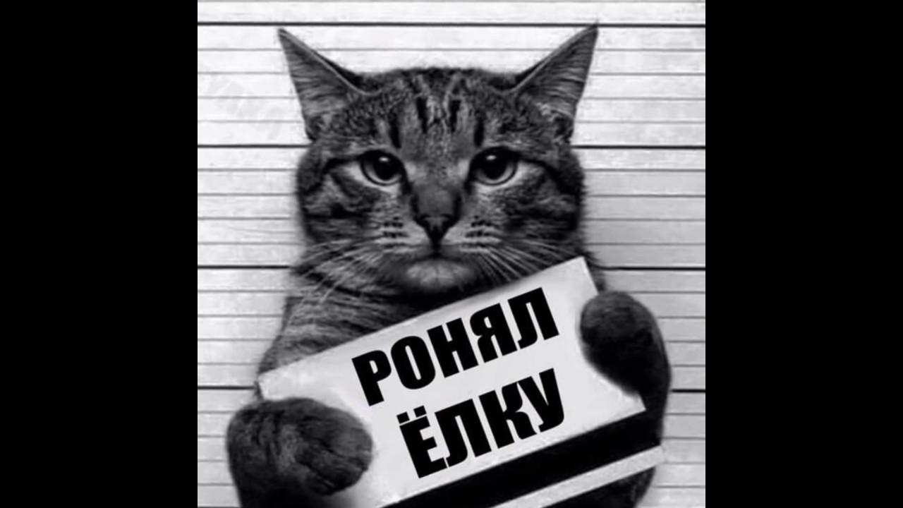 фото кота с табличкой в лапах снимке второй
