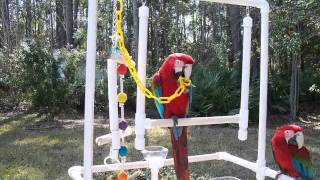 The Kilcrease Macaws