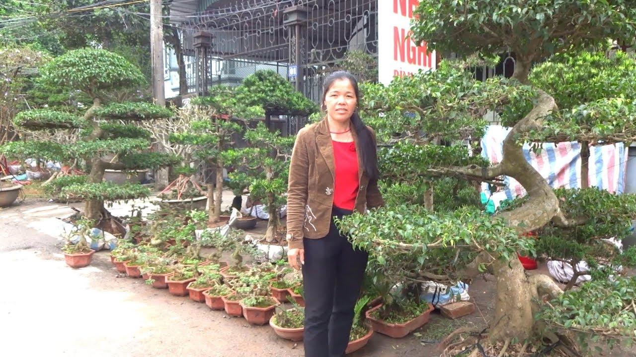 Chị Phượng báo giá từ cây bonsai đến cây khủng rẻ – bonsai market in Yen Tu – Uong Bi – Quang Ninh
