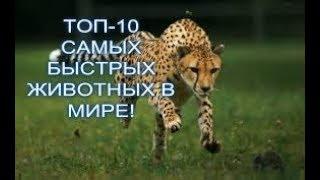 ТОП-10 САМЫХ БЫСТРЫХ ЖИВОТНЫХ В МИРЕ!