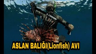 KAŞ ZIPKIN AVLARI - (Aslan balığı, Iskaroz, Barbun) Spearfishing Haziran 2018