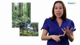 Learn Biology: Biodiversity Definition