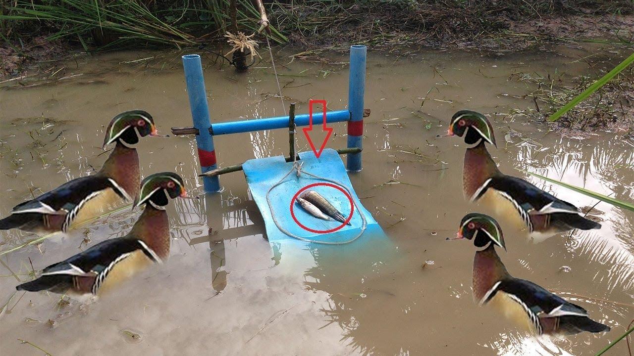 Как поймать уток на реке