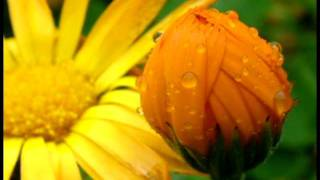 10 minutes of soft relaxing rain sound Makes you fall asleep easily