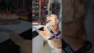 a smart dog can help his owner to do more work