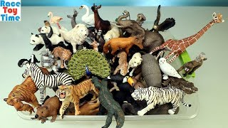Huge Toy Zoo Wild Animals Collection   Learn Animal Names For Kids