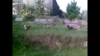 Westford Farm Campsite - Dartmoor - Devon - 21.09.2013