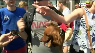 WATCH LIVE: Annual 'Running of the Wieners' race in Cincinnati, Ohio pits dog against dog   ABC News