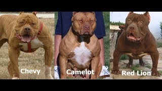 pit monster camelot - Video Search Results