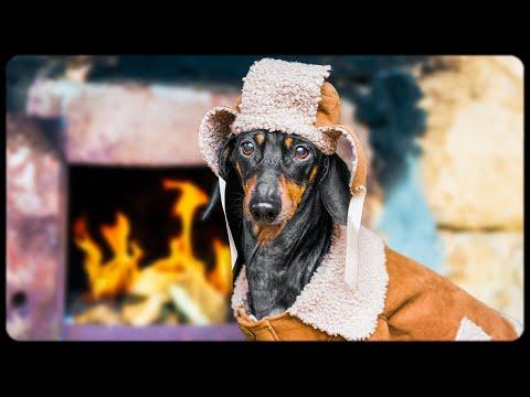 Funny DOG goes to the BANYA! Hilarious dachshund village adventure!