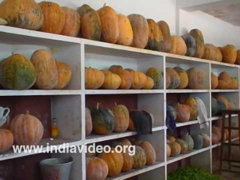 Kitchen Dharmasthala Dinning hall Annadana free food, Karnataka