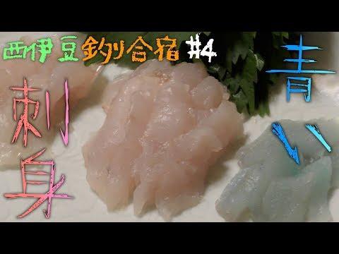 西伊豆釣り合宿 #4釣った魚のお刺身3種盛り!メバル、カサゴ、アナハゼ!