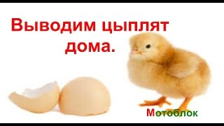 Вылупление цыплят Вывод цыплят дома.(Вылупление цыплят Вывод цыплят дома.Цыплята из инкубатора.Смотрите как из простого яйца для яичницы получа..., 2015-05-18T18:39:46.000Z)