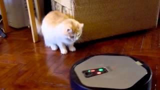 Робот пылесос и кошка