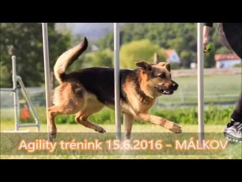Agility trénink MÁLKOV - 15.6.2016