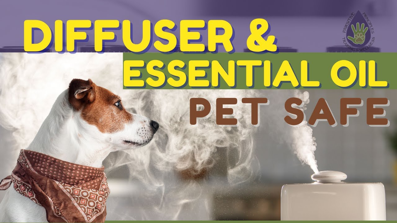 Improve Air Quality Using Pet Safe Essential Oils