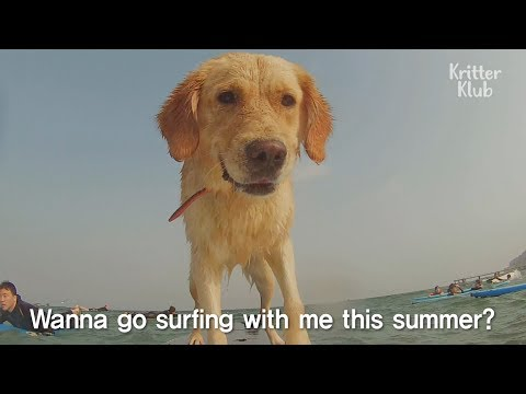 Amazing Surfing Dog Catches Every Wave | Kritter Klub