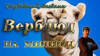 Верблюд на миллион: Самый большой рынок верблюдов в Саудовской Аравии