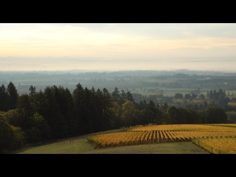 The Story of Oregon Pinot