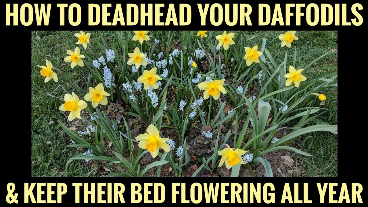 Dust off the pollen and show it