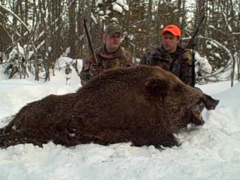 Russian Boar Hunting Bear Mountain - YouTubeGiant Wild Boar