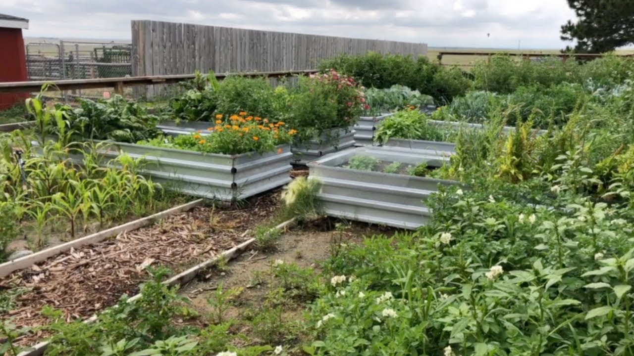 Building Our Raised Beds • The Prairie Homestead on raised herb box wooden design, camping plans, raised planters, raised gardens for handicapped, raised fish ponds designs, raised gardens for seniors, raised container gardening, raised bed lasagna gardening, yoga plans,