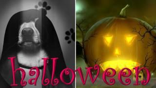 Шарик Шоу - как праздновать Halloween (выпуск 26)