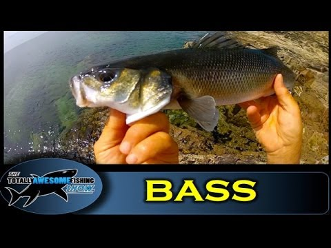 Bass fishing with Lures - The Totally Awesome Fishing Show